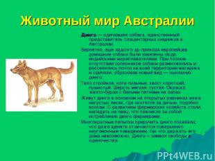 Животный мир Австралии Динго — одичавшая собака, единственный представитель плац