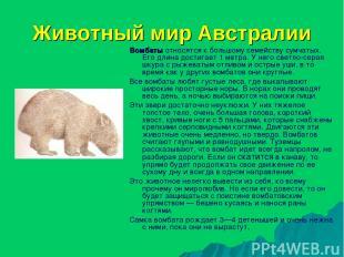 Животный мир Австралии Вомбаты относятся к большому семейству сумчатых. Его длин