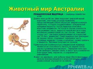 Животный мир Австралии ПЛАЩЕНОСНАЯ ЯЩЕРИЦА — ящерица семейства агам. Длина тела