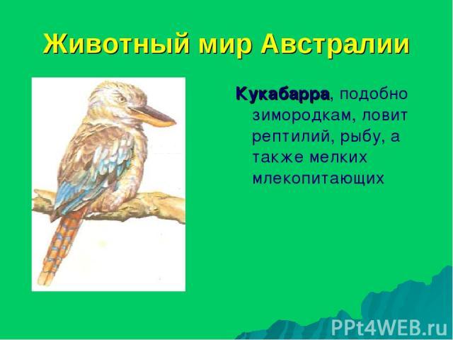 Животный мир Австралии Кукабарра, подобно зимородкам, ловит рептилий, рыбу, а также мелких млекопитающих