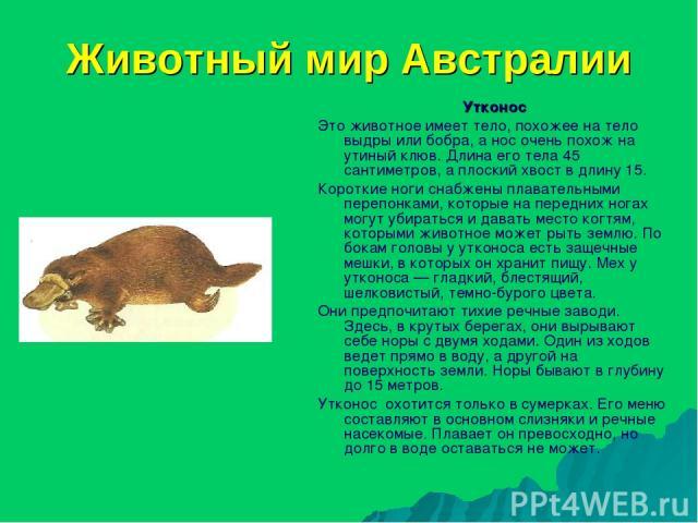 Животный мир Австралии Утконос Это животное имеет тело, похожее на тело выдры или бобра, а нос очень похож на утиный клюв. Длина его тела 45 сантиметров, а плоский хвост в длину 15. Короткие ноги снабжены плавательными перепонками, которые на передн…