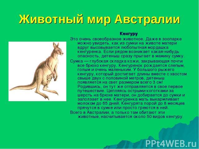 Животный мир Австралии Кенгуру Это очень своеобразное животное. Даже в зоопарке можно увидеть, как из сумки на животе матери вдруг высовывается любопытная мордашка кенгуренка. Если рядом возникает какая-нибудь опасность, детеныш сразу прыгает в мами…