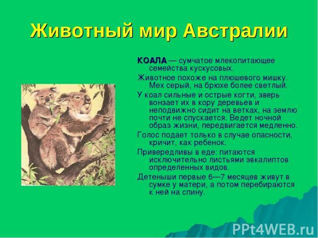 Животный мир Австралии КОАЛА — сумчатое млекопитающее семейства кускусовых. Животное похоже на плюшевого мишку. Мех серый, на брюхе более светлый. У коал сильные и острые когти, зверь вонзает их в кору деревьев и неподвижно сидит на ветках, на землю…
