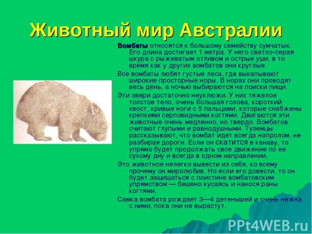 Животный мир Австралии Вомбаты относятся к большому семейству сумчатых. Его длина достигает 1 метра. У него светло-серая шкура с рыжеватым отливом и острые уши, в то время как у других вомбатов они круглые. Все вомбаты любят густые леса, где выкапыв…