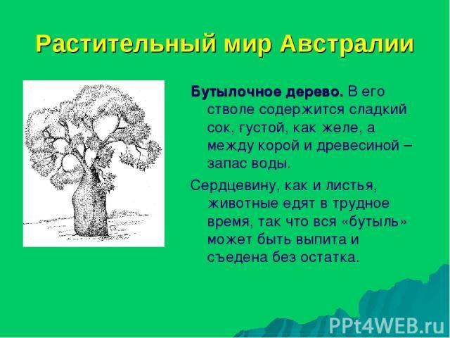 Растительный мир Австралии Бутылочное дерево. В его стволе содержится сладкий сок, густой, как желе, а между корой и древесиной – запас воды. Сердцевину, как и листья, животные едят в трудное время, так что вся «бутыль» может быть выпита и съедена б…