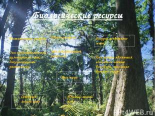 Биологические ресурсы Растительные ресурсы Они представлены как культурными, так