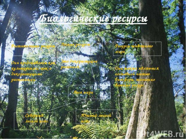 Биологические ресурсы Растительные ресурсы Они представлены как культурными, так и дикорастущими растениями. Лесные ресурсы Это дикорастущие растения. Леса мира Северный лесной пояс Южный лесной пояс Ресурсы животного мира Они также являются составн…