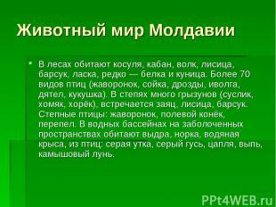 Животный мир Молдавии В лесах обитают косуля, кабан, волк, лисица, барсук, ласка