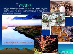 Тундра. Тундра характеризуется безлесием. Среди скудной растительности встречают
