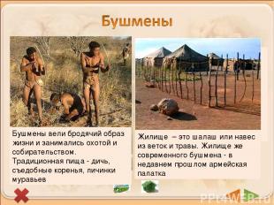 В пустынях и полупустынях Южной Африки живут бушмены. Сейчас их осталось немноги