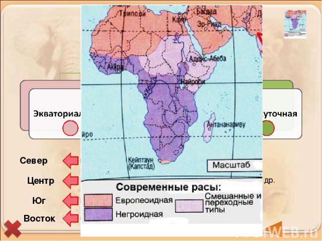 Берберы и арабы (туареги, алжирцы, египтяне) Бушмены и готтентоты Эфиопы, малагасийцы Нилоты, пигмеи, масаи, народы банту и др. негроиды Север Центр Юг Восток