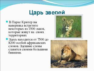 Царь зверей В Парке Крюгер вы наверняка встретите некоторых из 1500 львов, котор