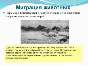 Миграция животных Парк Серенгети известен в первую очередь из-за ежегодной мигра