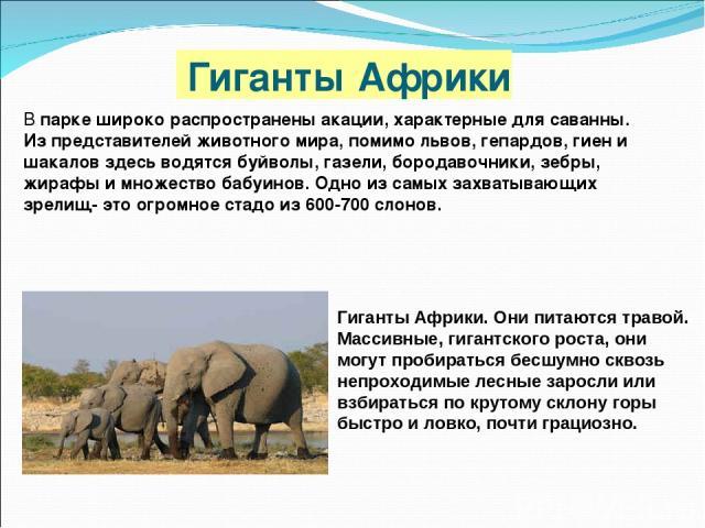Гиганты Африки В парке широко распространены акации, характерные для саванны. Из представителей животного мира, помимо львов, гепардов, гиен и шакалов здесь водятся буйволы, газели, бородавочники, зебры, жирафы и множество бабуинов. Одно из самых за…