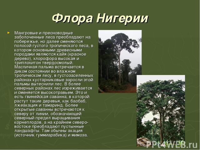 Флора Нигерии Мангровые и пресноводные заболоченные леса преобладают на побережье, но далее сменяются полосой густого тропического леса, в котором основными древесными породами являются кайя (красное дерево), хлорофора высокая и триплохитон твердосм…