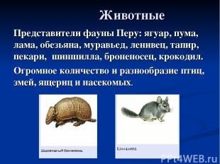 Животные Представители фауны Перу: ягуар, пума, лама, обезьяна, муравьед, лениве