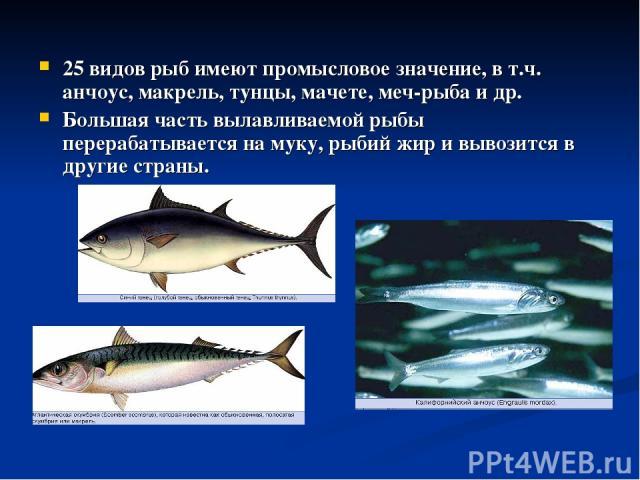 25 видов рыб имеют промысловое значение, в т.ч. анчоус, макрель, тунцы, мачете, меч-рыба и др. Большая часть вылавливаемой рыбы перерабатывается на муку, рыбий жир и вывозится в другие страны.