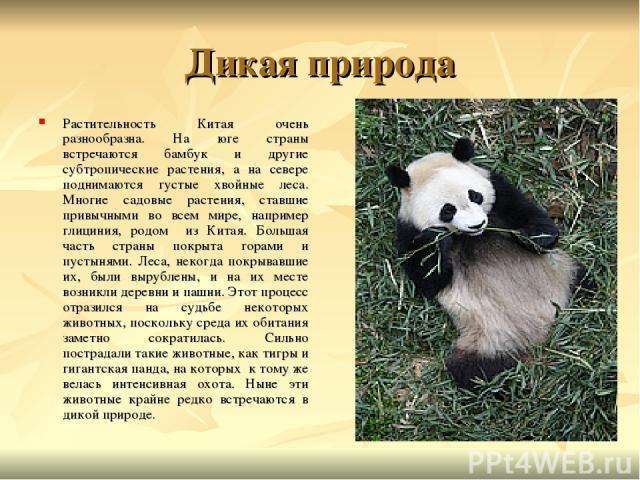 Дикая природа Растительность Китая очень разнообразна. На юге страны встречаются бамбук и другие субтропические растения, а на севере поднимаются густые хвойные леса. Многие садовые растения, ставшие привычными во всем мире, например глициния, родом…