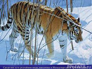 Среди них есть редчайшие виды, внесенные в Международную Красную книгу.