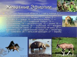 Животные Эфиопии… Животные Эфиопской области: 1 —лев и львица; 2 — лисица фенек;