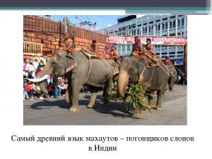 Самый древний язык махаутов – погонщиков слонов в Индии
