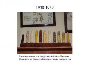 1930-1939. Коллекция початков кукурузы в кабинете Николая Ивановича во Всероссий