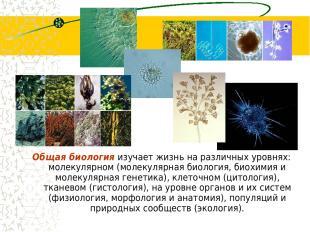 Общая биология изучает жизнь на различных уровнях: молекулярном (молекулярная би
