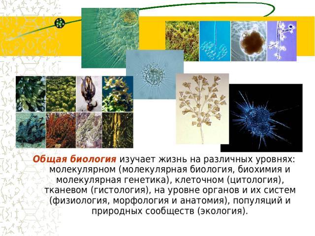 Общая биология изучает жизнь на различных уровнях: молекулярном (молекулярная биология, биохимия и молекулярная генетика), клеточном (цитология), тканевом (гистология), на уровне органов и их систем (физиология, морфология и анатомия), популяций и п…