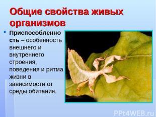 Общие свойства живых организмов Приспособленность – особенность внешнего и внутр