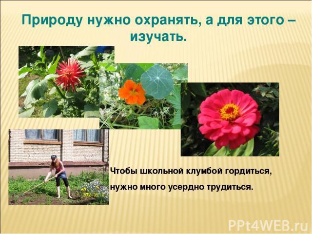 Природу нужно охранять, а для этого – изучать. Чтобы школьной клумбой гордиться, нужно много усердно трудиться.
