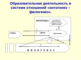 Образовательная деятельность в системе отношений «онтогенез – филогенез».