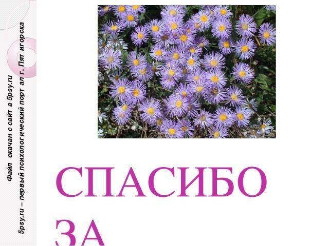 СПАСИБО ЗА ВНИМАНИЕ! Файл скачан с сайта 5psy.ru 5psy.ru – первый психологический портал г. Пятигорска