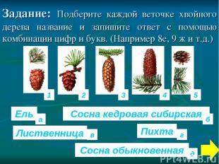 Задание: Подберите каждой веточке хвойного дерева название и запишите ответ с по