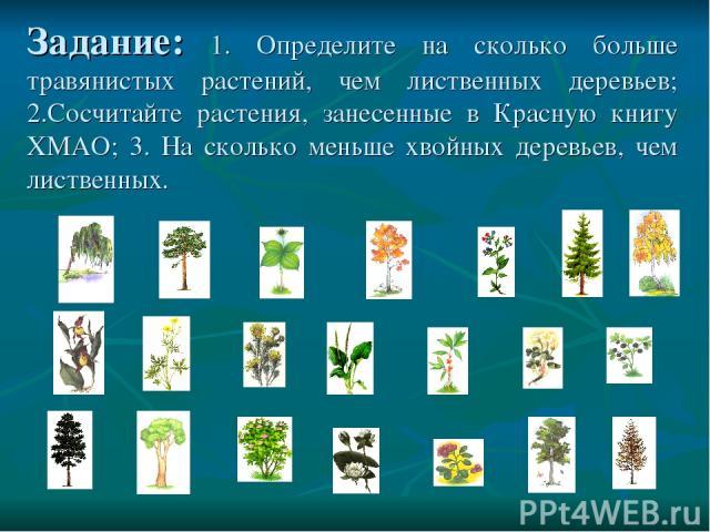 Задание: 1. Определите на сколько больше травянистых растений, чем лиственных деревьев; 2.Сосчитайте растения, занесенные в Красную книгу ХМАО; 3. На сколько меньше хвойных деревьев, чем лиственных.