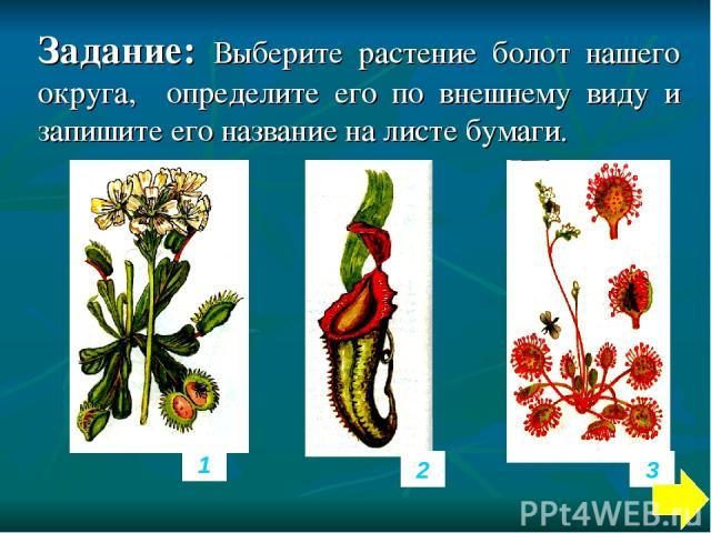 Задание: Выберите растение болот нашего округа, определите его по внешнему виду и запишите его название на листе бумаги. 1 2 3