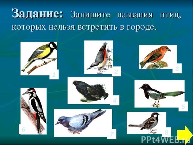 Задание: Запишите названия птиц, которых нельзя встретить в городе. 1 4 6 3 2 7 8 5