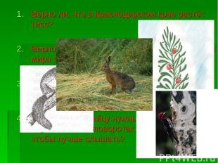 Верно ли, что в Краснодарском крае растёт тисс? Верно ли, что соня – летучая мыш