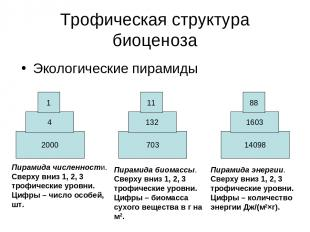 Трофическая структура биоценоза Экологические пирамиды 2000 4 1 703 132 11 14098