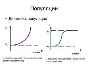 Популяции Динамика популяций J-образная кривая роста численности (экспоненциальн