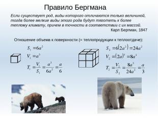 Правило Бергмана Если существует род, виды которого отличаются только величиной,