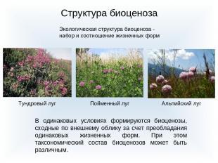 Структура биоценоза Экологическая структура биоценоза - набор и соотношение жизн