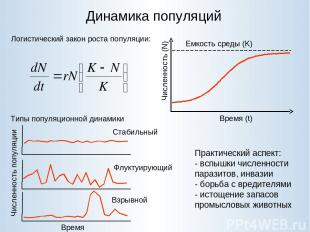 Динамика популяций Логистический закон роста популяции: Типы популяционной динам