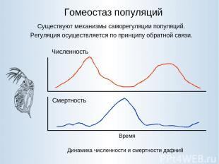 Гомеостаз популяций Существуют механизмы саморегуляции популяций. Регуляция осущ