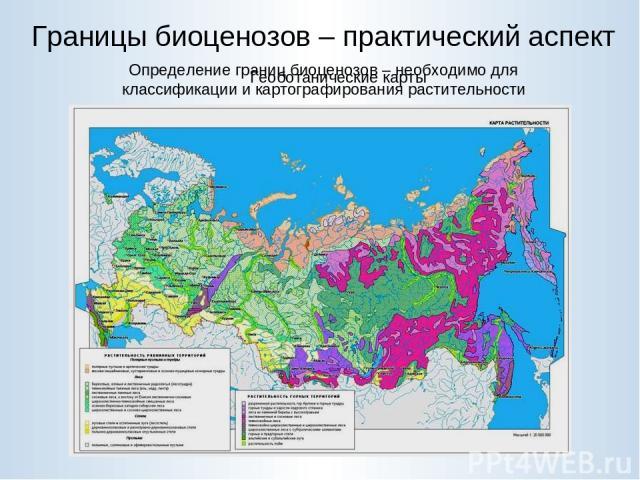 Границы биоценозов – практический аспект Определение границ биоценозов – необходимо для классификации и картографирования растительности Геоботанические карты