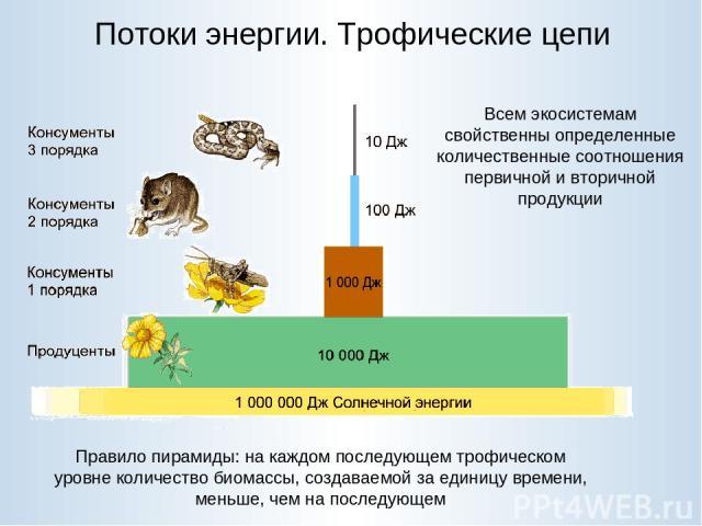 Потоки энергии. Трофические цепи Правило пирамиды: на каждом последующем трофическом уровне количество биомассы, создаваемой за единицу времени, меньше, чем на последующем Всем экосистемам свойственны определенные количественные соотношения первично…