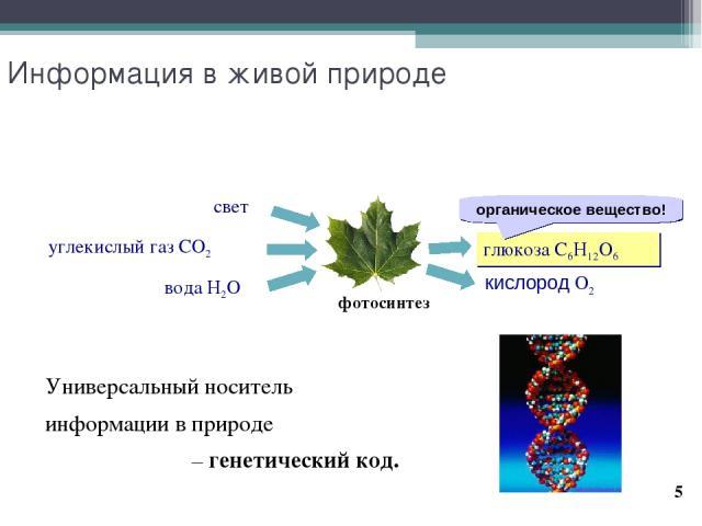 * Информация в живой природе Универсальный носитель информации в природе – генетический код. фотосинтез глюкоза C6H12O6 кислород O2 вода H2O углекислый газ CO2 свет органическое вещество!