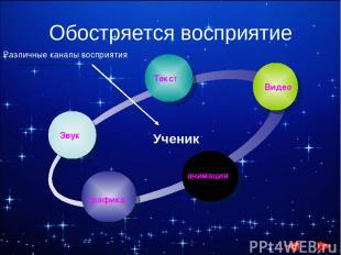Обостряется восприятие Звук Текст Видео анимация графика Ученик Различные каналы