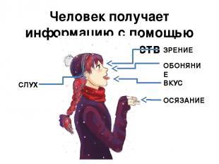Человек получает информацию с помощью органов чувств ЗРЕНИЕ СЛУХ ОБОНЯНИЕ ОСЯЗАН