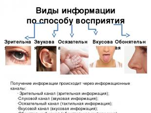 Виды информации по способу восприятия Зрительная Звуковая Вкусовая Обонятельная