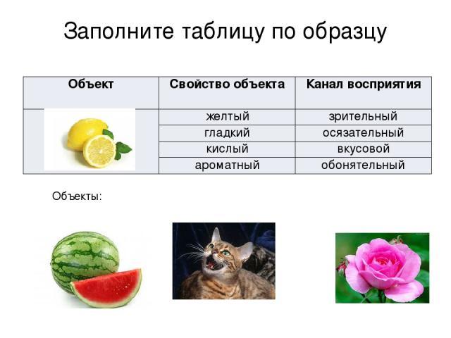 Заполните таблицу по образцу Объекты: Объект Свойствообъекта Канал восприятия желтый зрительный гладкий осязательный кислый вкусовой ароматный обонятельный